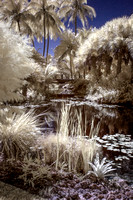 Infrared -  Landscape and Floral Photography in Florida - Mounts Botanical Gardens.