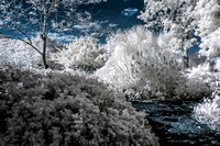 Infrared Landscape and Floral Photography in Florida - Mounts Botanical Gardens.