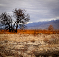 Sierra Nevada, California - Fine Art Photography